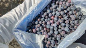blue-berry-box